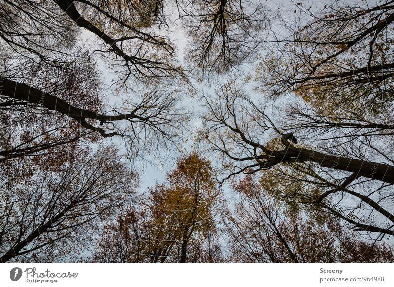 Überhang Natur Landschaft Pflanze Himmel Wolken Herbst Baum Wald Wachstum bedrohlich gruselig Gefühle Stimmung Kraft Angst Nervosität Schüchternheit Farbfoto