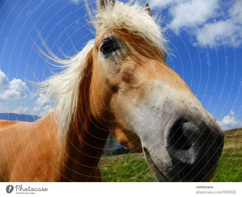 happy horse Natur blau grün Landschaft Tier natürlich Freiheit braun elegant Kraft Zufriedenheit Energie groß Freundlichkeit Pferd gut