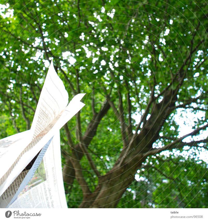 Blattwerk grün Sommer Papier lesen Kommunizieren Schriftzeichen Zeitung Information Medien Quadrat Langeweile Zeitschrift lügen Politik & Staat Leser aktuell