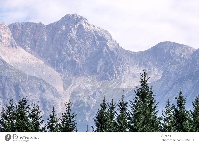 Baumgrenze Himmel blau Pflanze grün Landschaft Ferne Wald Berge u. Gebirge hell hoch Abenteuer Gipfel Alpen Tanne hell-blau