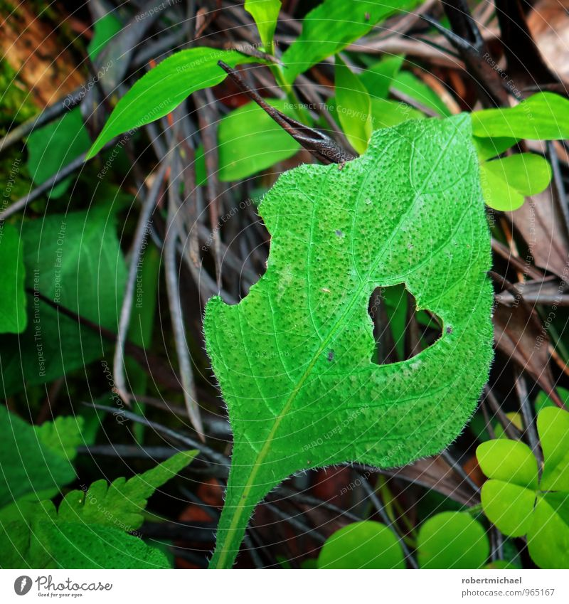 Hungry for Love Natur Pflanze Blatt Grünpflanze Kleeblatt Farnblatt Blühend füttern Liebe Wachstum grün Gefühle Stimmung Lebensfreude Frühlingsgefühle