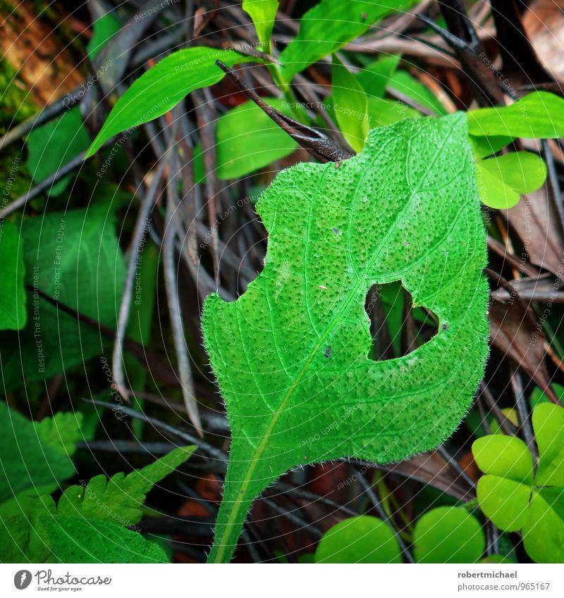 Hungry for Love Natur Pflanze grün Blatt Umwelt Gefühle Liebe Stimmung Wachstum Beginn Herz Blühend Lebensfreude Romantik Leidenschaft Appetit & Hunger