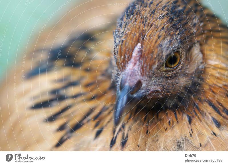 Ich wollt, ich wär ein .... grün ruhig Tier schwarz Auge feminin natürlich grau braun Lebensmittel Vogel Kopf orange sitzen warten Ernährung