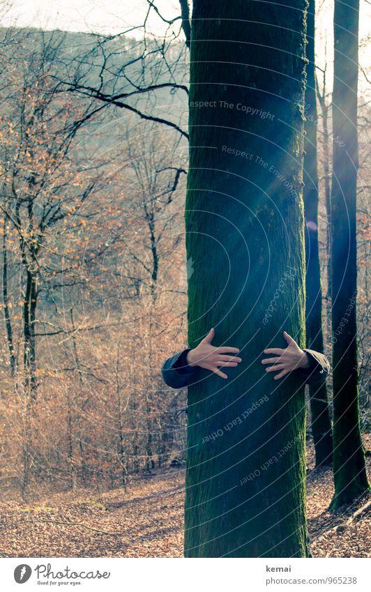 Südpfalz | Festhalten Mensch Natur Sonne Baum Hand Blatt Wald Umwelt Leben Herbst außergewöhnlich Freundschaft Freizeit & Hobby Arme Ausflug Finger