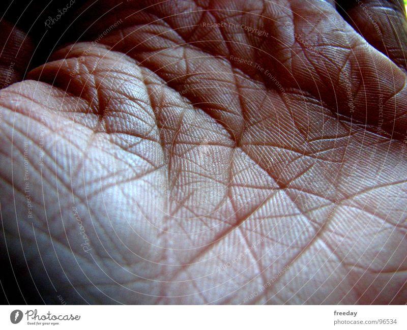 ::: Netzwerk ::: Hand Finger Strukturen & Formen Handfläche Hautfarbe Götter Spuren Handwerk sensibel Gesundheit berühren Muster lesen Senior Makroaufnahme