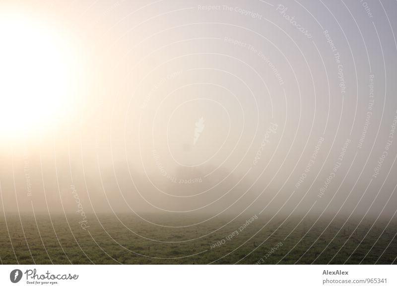 versteckt Ausflug Ferne Schönes Wetter Nebel Wiese Feld Ebene ästhetisch authentisch frei frisch kalt natürlich Stimmung ruhig Einsamkeit Horizont Natur träumen