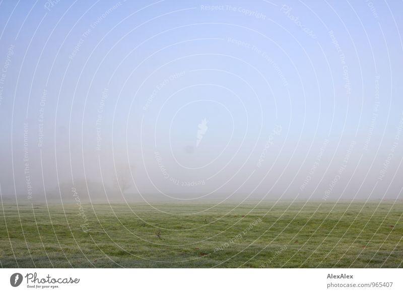 Herbstmorgen Ausflug Ferne Umwelt Natur Landschaft Pflanze Erde Luft Schönes Wetter Nebel Baum Gras Sträucher Raureif Wiese Feld ästhetisch authentisch einfach