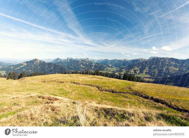 Auf in die Berge! Umwelt Natur Landschaft Pflanze Himmel Wolkenloser Himmel Frühling Sommer Wetter Schönes Wetter Wiese Wald Alpen Berge u. Gebirge wandern