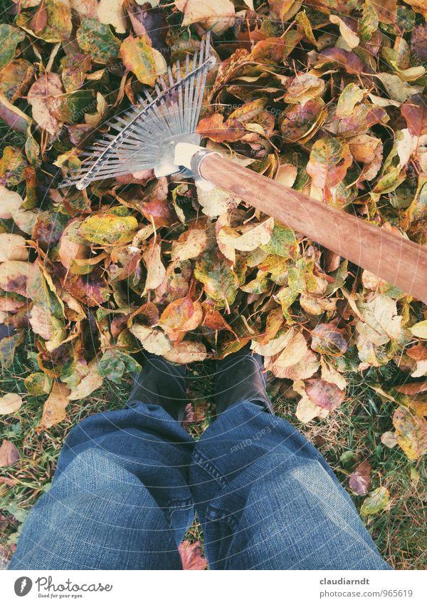 Herbstgarten Mensch Beine Fuß 1 Natur Pflanze Baum Blatt Garten Arbeit & Erwerbstätigkeit mehrfarbig Gartenarbeit Laubbesen Drahtbesen Harke Herbstlaub harken