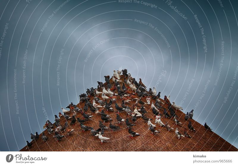 Ferien & Urlaub & Reisen Strand Umwelt Herbst Vogel Wetter Zufriedenheit Klima Urelemente planen Wolkenloser Himmel Unwetter Taube Schwarm Gewitterwolken
