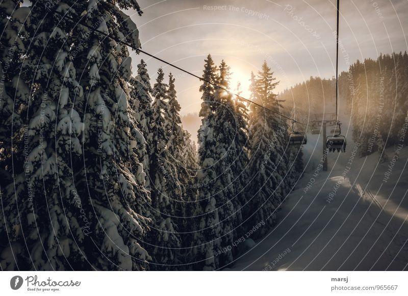Es geht los! Ferien & Urlaub & Reisen Ausflug Winter Schnee Winterurlaub Sport Wintersport Skifahren Skilift Sesselbahn Natur Sonnenlicht Schönes Wetter Wald