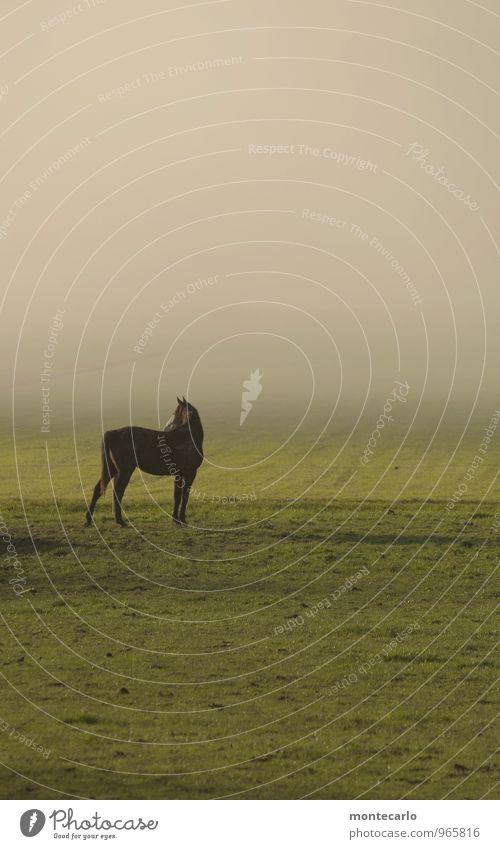 hieb- und stichfest | da steht ein pferd.... Umwelt Natur Pflanze Erde Sonnenlicht Herbst Wetter Schönes Wetter Nebel Gras Wiese Feld Tier Pferd 1 beobachten