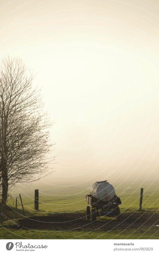 tränke Umwelt Natur Pflanze Herbst Wetter Schönes Wetter Nebel Baum Gras Grünpflanze Wildpflanze Wiese Feld Anhänger Holz Metall entdecken wandern authentisch