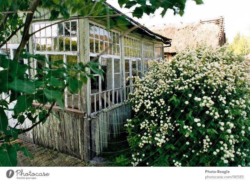 Sommerhaus Haus Veranda Wintergarten Ferienhaus Gebäude Gartenhaus Ostalgie Holz grün Verfall verfallen baufällig Verhext Vergänglichkeit früher Trauer