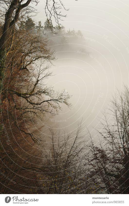 700 m ü.d.M. Umwelt Natur Pflanze Luft Herbst Wetter schlechtes Wetter Nebel Baum Blatt Grünpflanze Wildpflanze Wald authentisch dunkel einfach hoch einzigartig