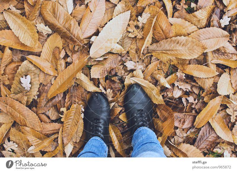 bodenständig Mensch Ferien & Urlaub & Reisen Blatt Wald kalt Herbst feminin Freiheit gehen braun Fuß Park Tourismus stehen Schuhe wandern