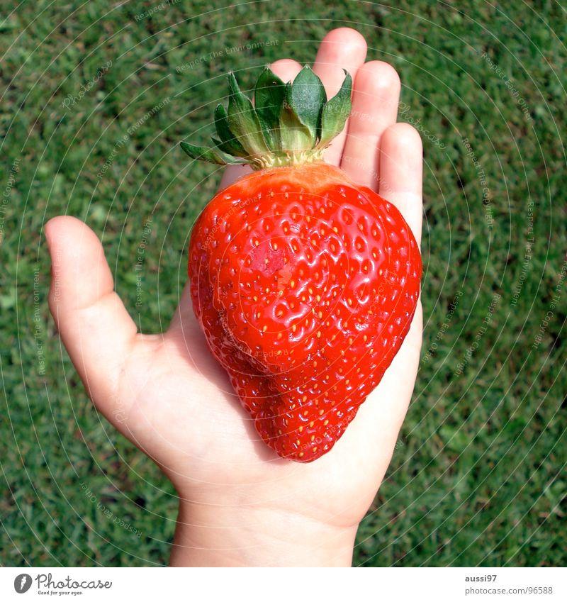 Monstren,Mumien,Mutationen Hand Gras Macht Dimension Genmanipulation groß Koloss rot Gartenarbeit Kinderhand Wert Frucht Sommer Erdbeeren überdimensioniert