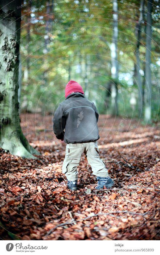 Sachenfinder Lifestyle Freude Freizeit & Hobby Ausflug wandern Spaziergang herbstspaziergang Kind Kleinkind Junge Kindheit Leben Rücken 1 Mensch 1-3 Jahre