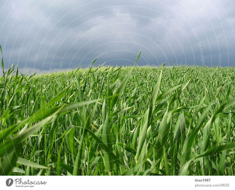 Die Ruhe vor dem Sturm ... Natur Landschaft Wolken Gewitterwolken Wetter schlechtes Wetter Unwetter Wind Regen Nutzpflanze Wiese Feld blau grün Gelassenheit