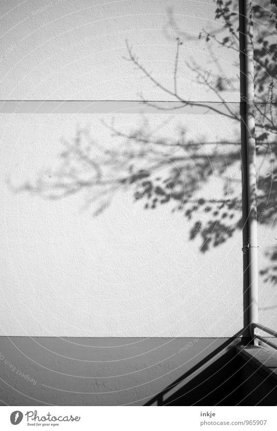 graues Grün Herbst Winter Baum Menschenleer Mauer Wand Fassade Regenrohr dünn einfach lang Stadt Natur Geäst Schattenspiel Schwarzweißfoto Außenaufnahme