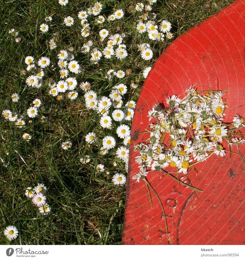 Der Tod steht auch ihnen gut Gänseblümchen rasenmähen gelb grün weiß Frühling Wiese Rasenmäher frisch Blume Hoffnung Vergänglichkeit schön