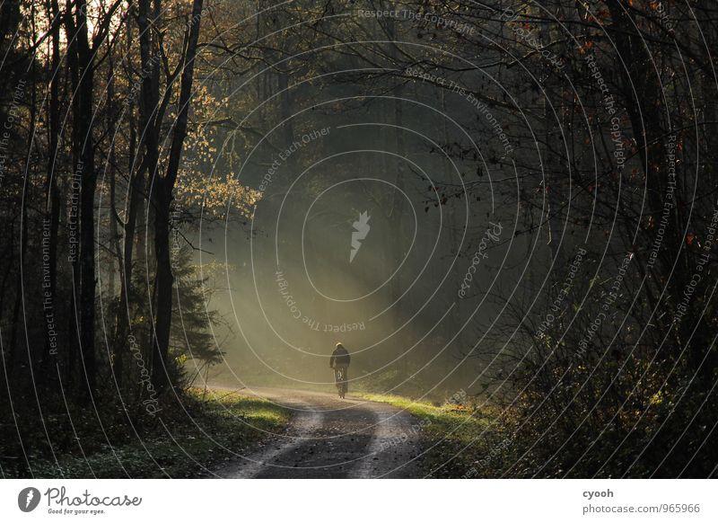 die Natur genießen Fahrradfahren Herbst Wald Erholung leuchten Sport träumen frei Gesundheit kalt natürlich sportlich Glück Zufriedenheit Lebensfreude Bewegung