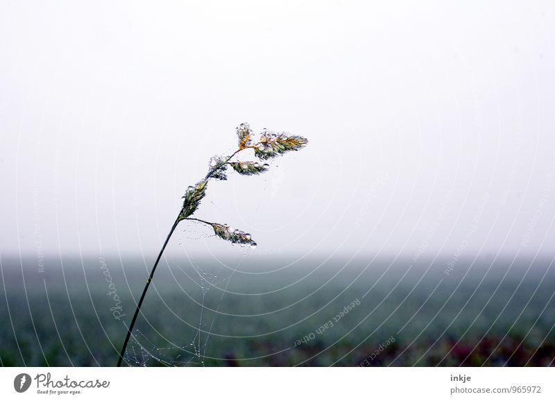 früh morgens auf den Feldern II Umwelt Natur Landschaft Pflanze Luft Wassertropfen Winter Klima schlechtes Wetter Nebel Gras Halm Wiese Tau frisch kalt nass