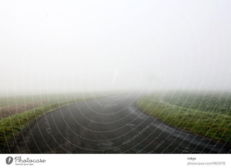 bis zum Baum und weiter raus Einsamkeit Landschaft Winter kalt Umwelt Herbst Wege & Pfade Horizont Luft Feld Nebel trist Verkehr Ziel Ende Kurve