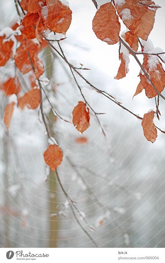 Feuchtigkeit | kalt erwischt Natur Ferien & Urlaub & Reisen Pflanze Baum Erholung ruhig Winter Wald Umwelt Herbst Schnee Schneefall Eis Zukunft