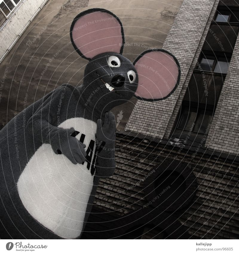 studentenjob Mensch Freude Tier lachen lustig Nase Ohr Maske heiß Beruf Student Zeichen Fell Karneval Bauernhof Werbung