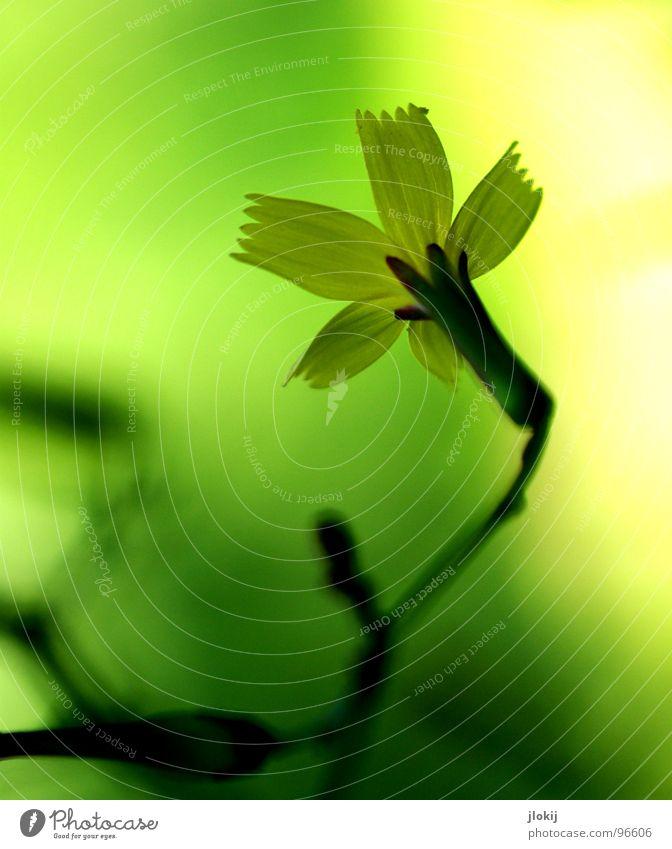 Scheinwerfer kaputt Natur grün schön Pflanze Sonne Blume gelb Wiese Leben Gras Frühling Blüte Lampe hell Beleuchtung Wachstum