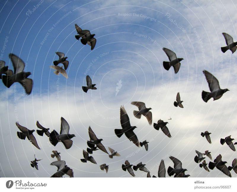 ein Taubenmeer in Barcelona Farbfoto Freiheit Himmel Wolken Vogel Flügel fliegen Ferne frei Zusammensein oben viele blau Stimmung Einigkeit Tierliebe träumen