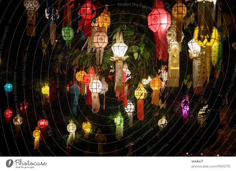 Lichterfest Baum Lampion ästhetisch exotisch Wärme mehrfarbig gelb rot Religion & Glaube Tradition Thailand Asien Buddhismus Außenaufnahme Menschenleer