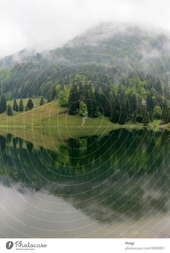 Frühnebel... Umwelt Natur Landschaft Pflanze Frühling Nebel Baum Gras Berge u. Gebirge See stehen Wachstum ästhetisch authentisch natürlich grau grün Stimmung