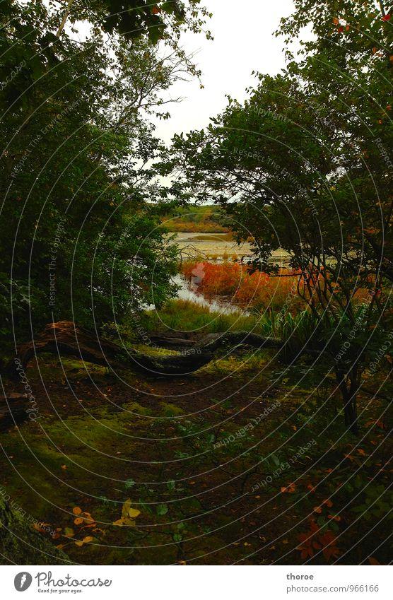 Indian Summer Umwelt Natur Landschaft Pflanze Herbst Baum Gras Sträucher Blatt Wald Erholung braun gelb gold grün orange Gefühle Stimmung Zufriedenheit schön