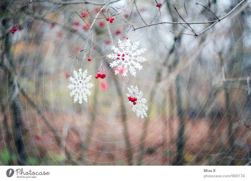 Winterdeko Garten Dekoration & Verzierung Weihnachten & Advent Wetter Eis Frost Schnee Schneefall Sträucher Wald Kitsch Krimskrams hängen kalt Schneekristall