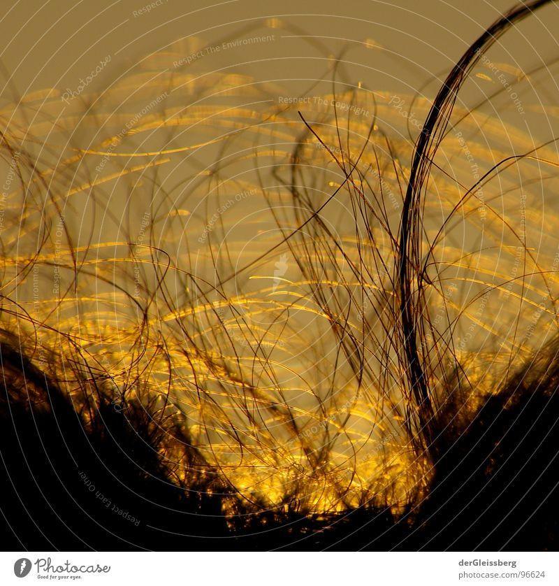 fremde Welten Physik dunkel schwarz gelb braun Licht Oberfläche grau schön Freundlichkeit diffus Makroaufnahme Nahaufnahme Haare & Frisuren Kopf Sonne Wärme
