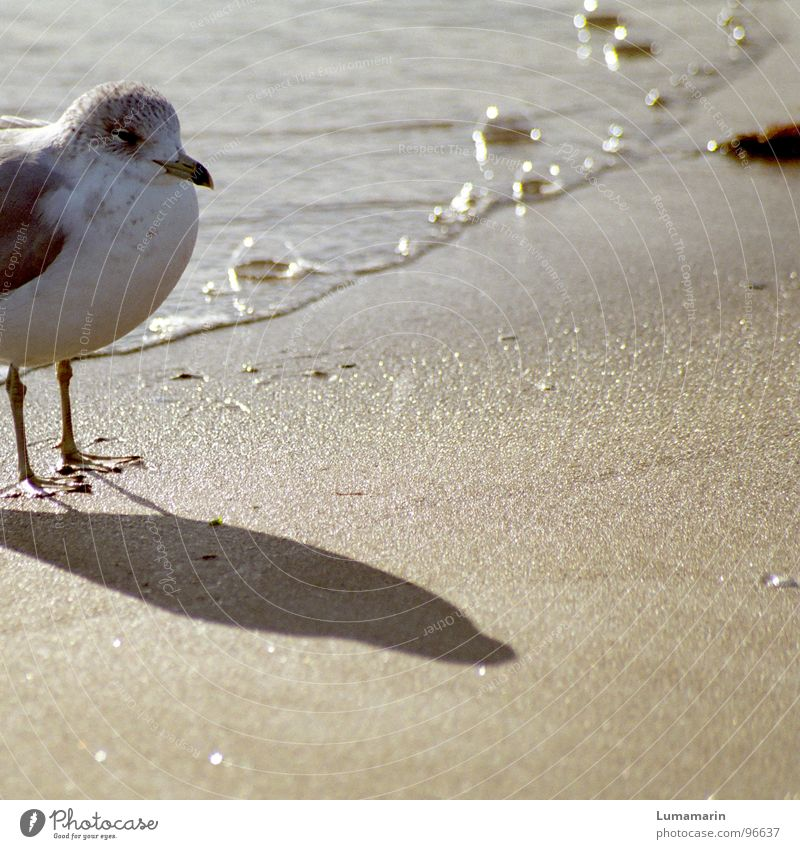 Strandwache Wasser weiß Sommer Meer ruhig Wärme Küste grau Sand Fuß Vogel Linie warten stehen Ecke