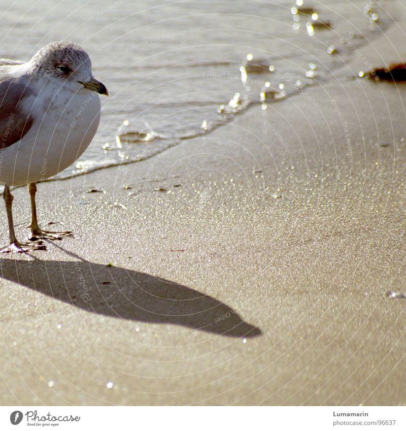 Strandwache Wasser weiß Sommer Meer Strand ruhig Wärme Küste grau Sand Fuß Vogel Linie warten stehen Ecke