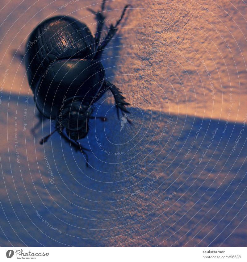und er hält sogar in der Senkrechten... Beine Fuß Angst Arme laufen Papier Flügel fallen festhalten Insekt Flucht Käfer Panik Tuch kleben gepanzert