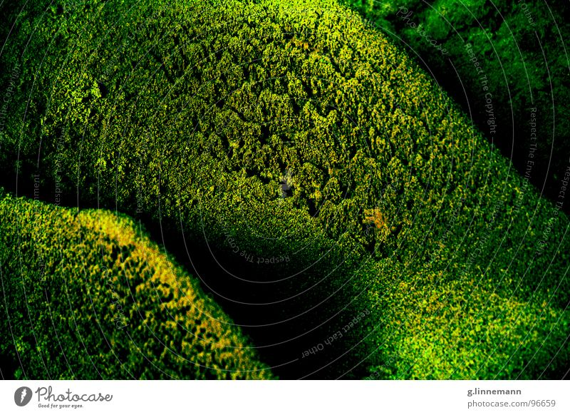neuland Natur Wasser Baum grün blau Sonne Blume Wald gelb kalt dunkel Spielen Herbst Gras grau Graffiti