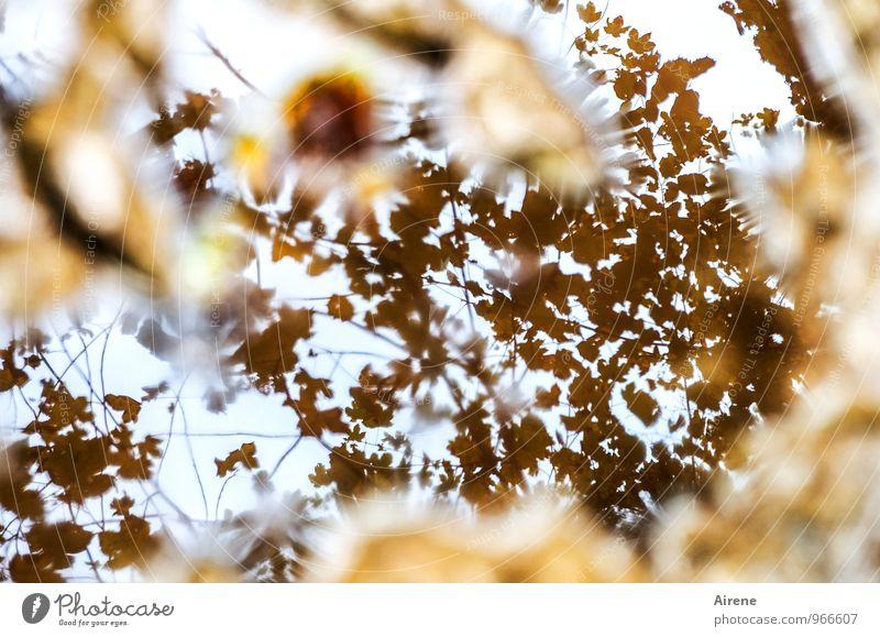 noch'n Verwirrspiel Himmel Pflanze weiß Wasser Baum Blatt gelb Herbst braun liegen nass Vergänglichkeit Wandel & Veränderung fallen Im Wasser treiben Irritation
