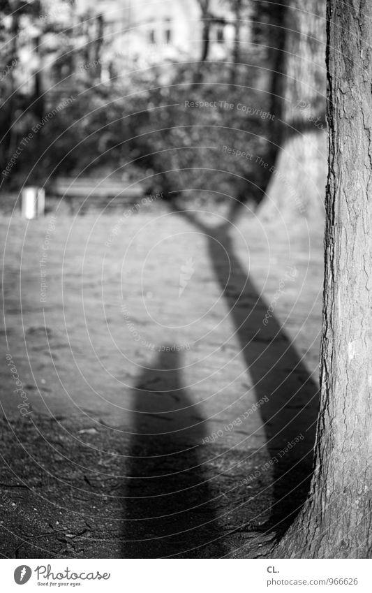 ich schon wieder Freizeit & Hobby Mensch Erwachsene 1 Umwelt Natur Schönes Wetter Baum Garten Wiese Selbstportrait Baumstamm Schattenspiel Fotografieren