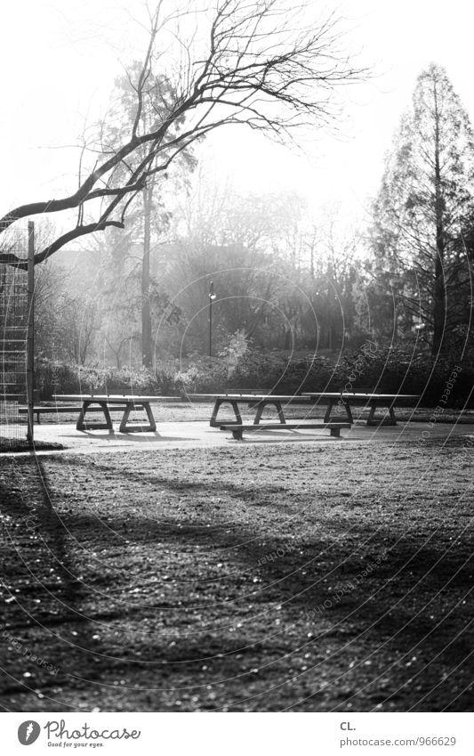 ping pong park Freizeit & Hobby Tischtennis Tischtennisplatte Sportstätten Umwelt Natur Landschaft Sonnenlicht Herbst Wetter Schönes Wetter Baum Sträucher Park