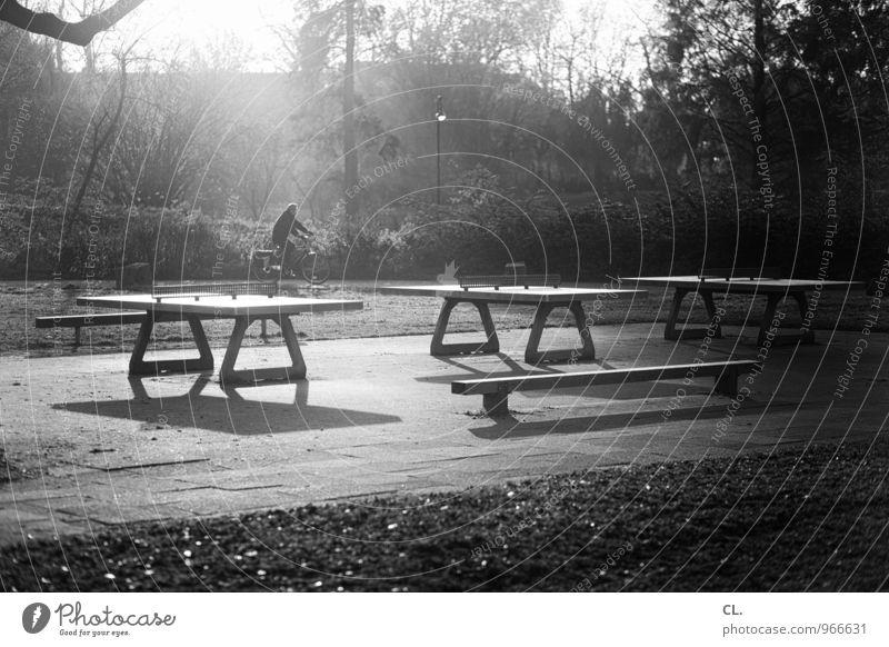 ping pong park Sport Fahrradfahren Tischtennisplatte Sportstätten Mensch 1 Umwelt Natur Landschaft Sonnenlicht Herbst Wetter Schönes Wetter Baum Sträucher Park