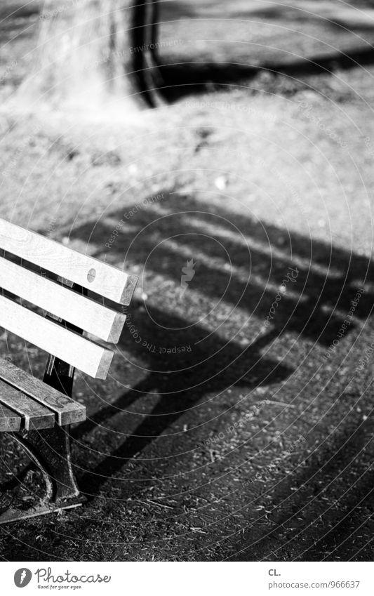 lange schatten Umwelt Natur Schönes Wetter Baum Gras Park Wiese Bank Baumstamm sitzen Pause ruhig Schwarzweißfoto Außenaufnahme Menschenleer Tag Licht Schatten