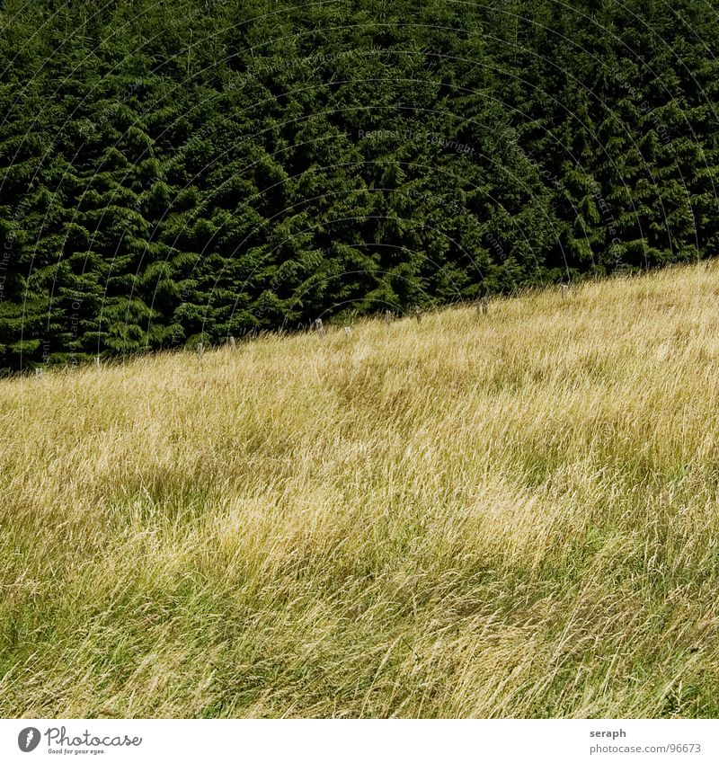 Grasland Wiese Feld Zaun Pfosten Barriere Tanne Baum Nadelbaum Berghang Hügel diagonal Wald Strukturen & Formen ländlich Umwelt Natur Landschaft Halm Getreide