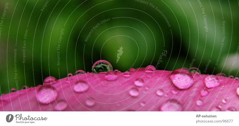 Tropfen *7 Regen Makroaufnahme frisch nass feucht Blatt Reflexion & Spiegelung grün grasgrün rund glänzend Wasser ruhig leicht perfekt rosa Nahaufnahme
