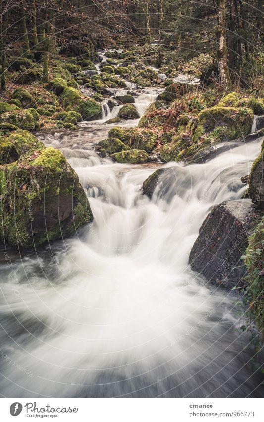 Schwarzwaldbach Natur Ferien & Urlaub & Reisen Pflanze grün Wasser Baum Landschaft Wald Umwelt Berge u. Gebirge Herbst natürlich Freiheit Felsen Wetter