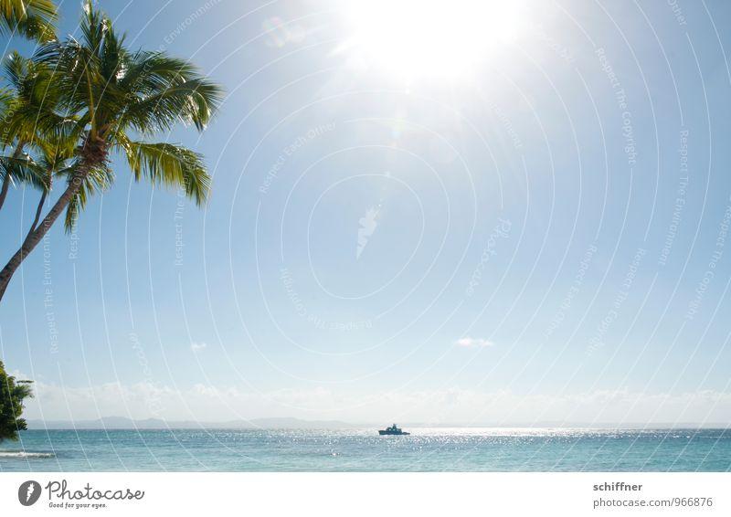 Der Planet brennt Umwelt Natur Horizont Sonne Sonnenlicht Sommer Schönes Wetter Pflanze Baum exotisch Wellen Küste Strand Meer blau türkis Wasserfahrzeug